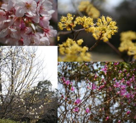 甲山公園2.jpg